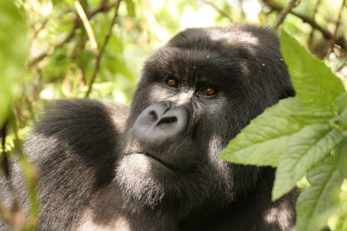 Close Encounters of the primate kind….