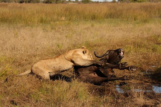 Botswana 33