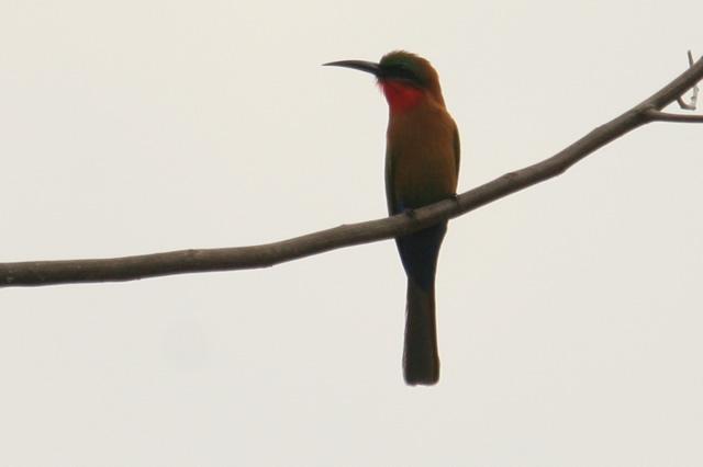 Uganda (10)