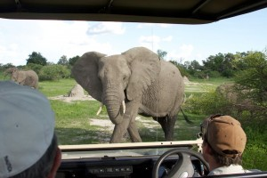 Watching an elephant pass