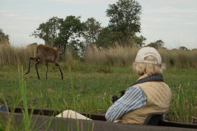 view of a sitatunga from a mokoro
