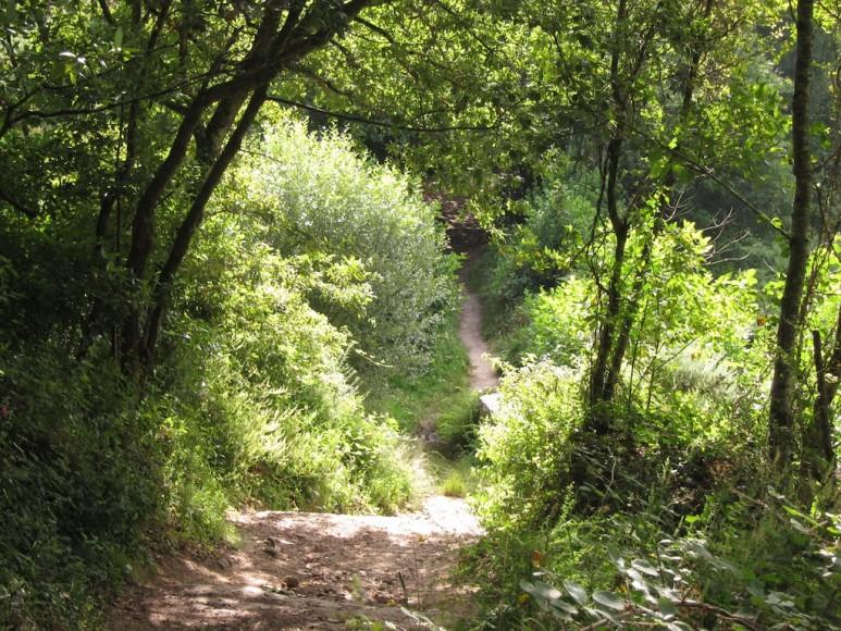 Camino (42)