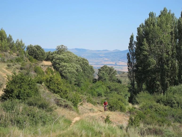 Camino (6)