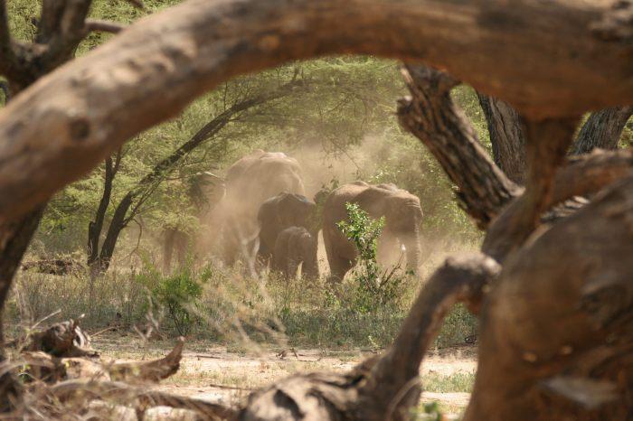 A private safari