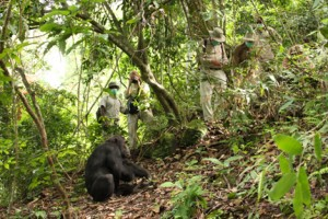 Chimp Viewing at mahale mountains NP