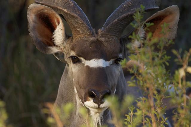 Botswana 14