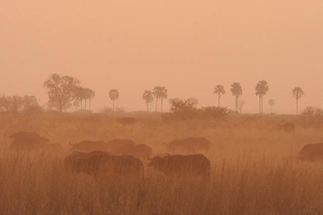 Botswana 32
