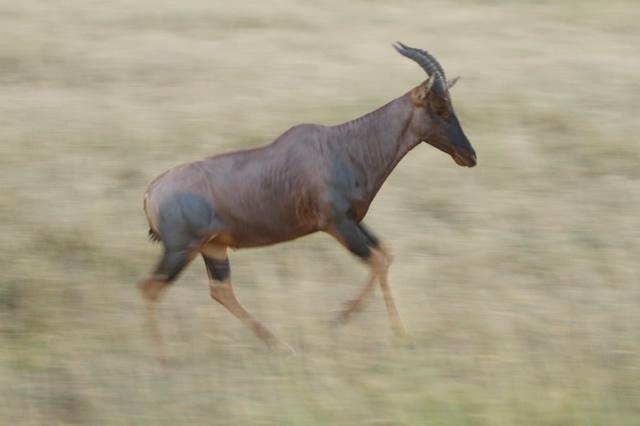 Kenya (12)