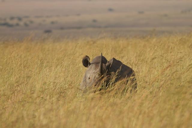 Kenya (16)