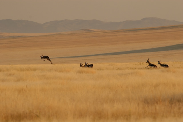 Namibia 13