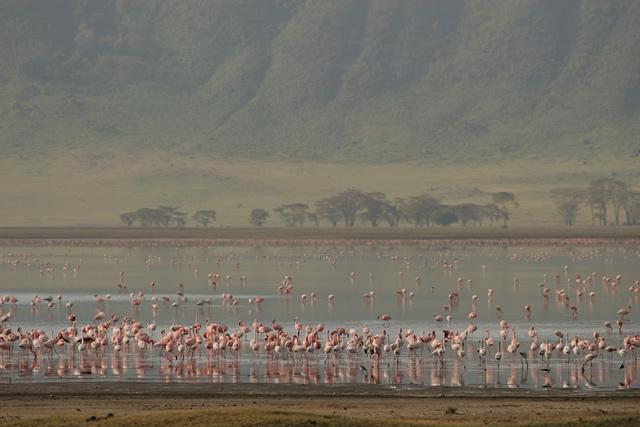 Tanzania 24