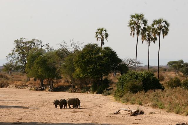 Tanzania 32