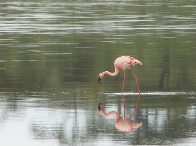 Tanzania 86