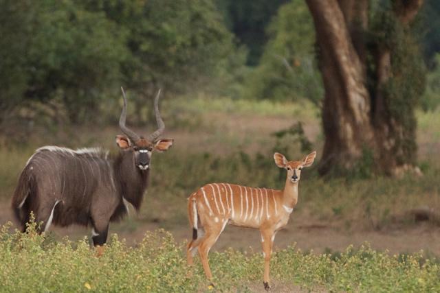 Zimbabwe (13)
