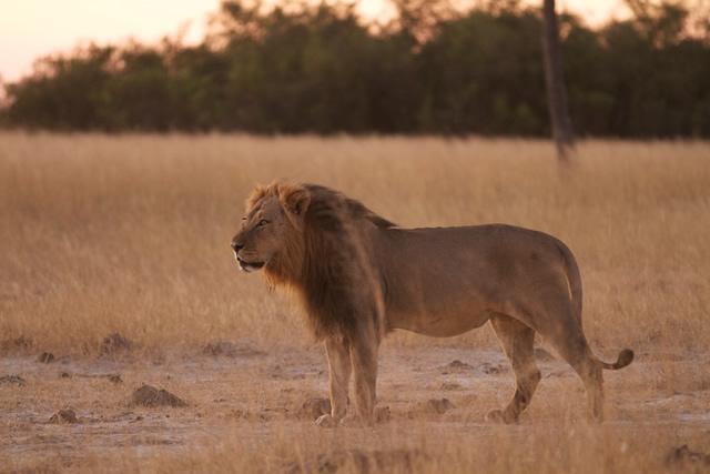 Zimbabwe (34)