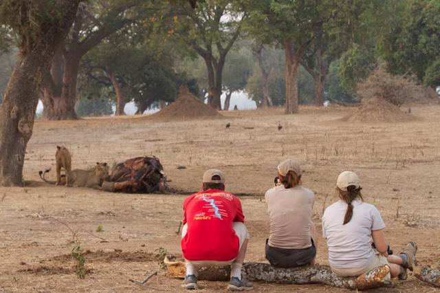 Zimbabwe (61)
