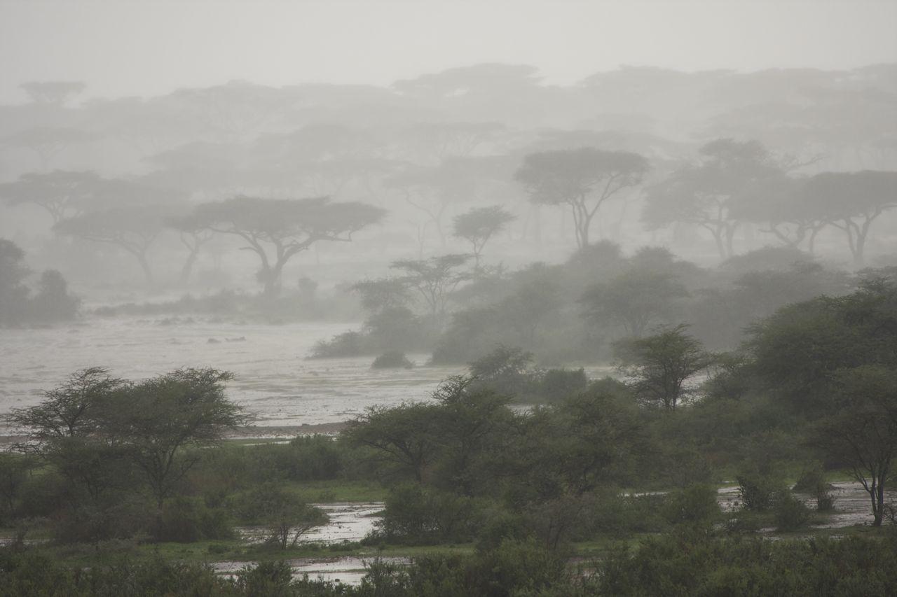 The Rains Arrive In Northern Tanzania A Step Ahead
