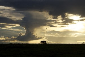 Sunset and a wildebeest