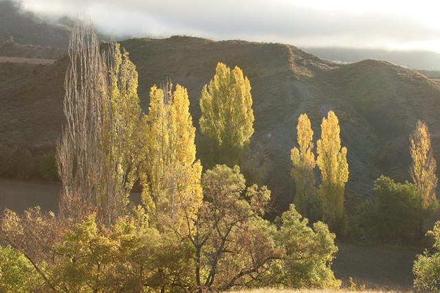 Pyrenees (6)