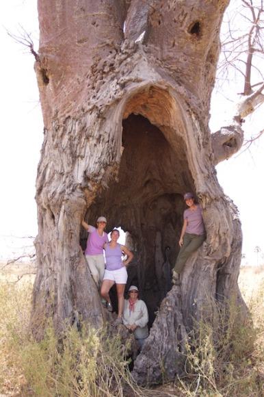 inside a baobab tree