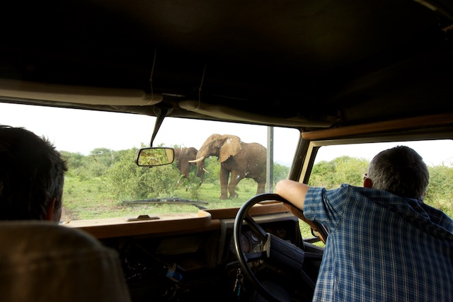 Stopping for elephants