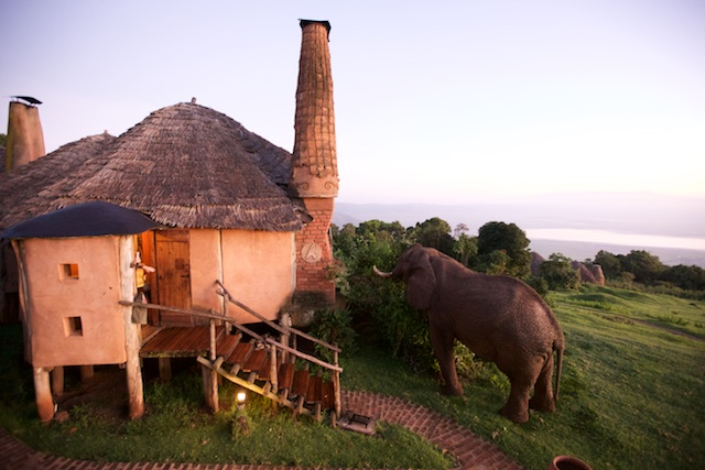Bull elephant feeding at dawn