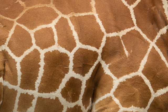 A reticulated pattern