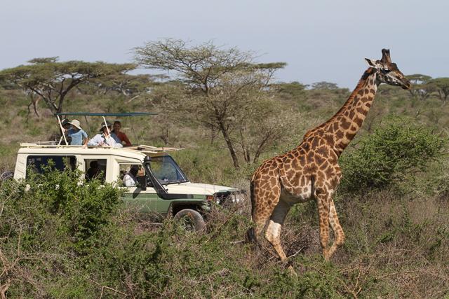 Giraffe view