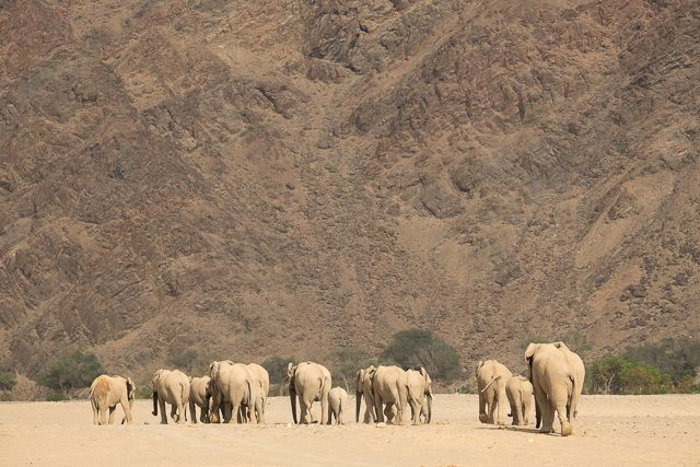 the elephants and the desert