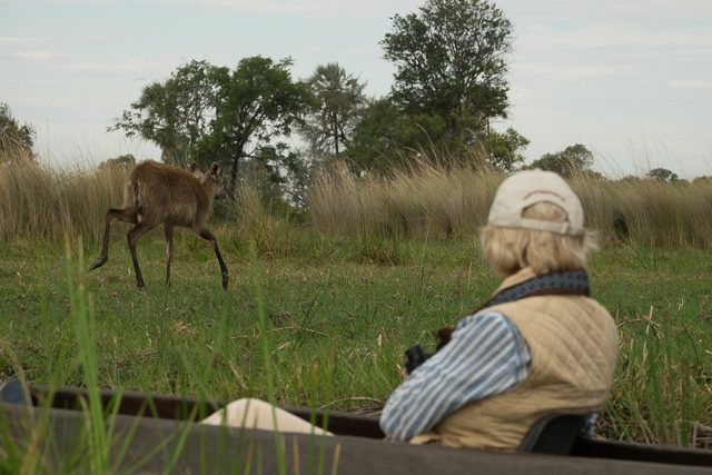 view of a sitatunga from a mokoro