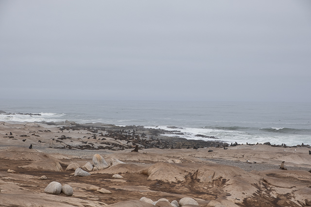 Seal colony on the Skeleton Coast